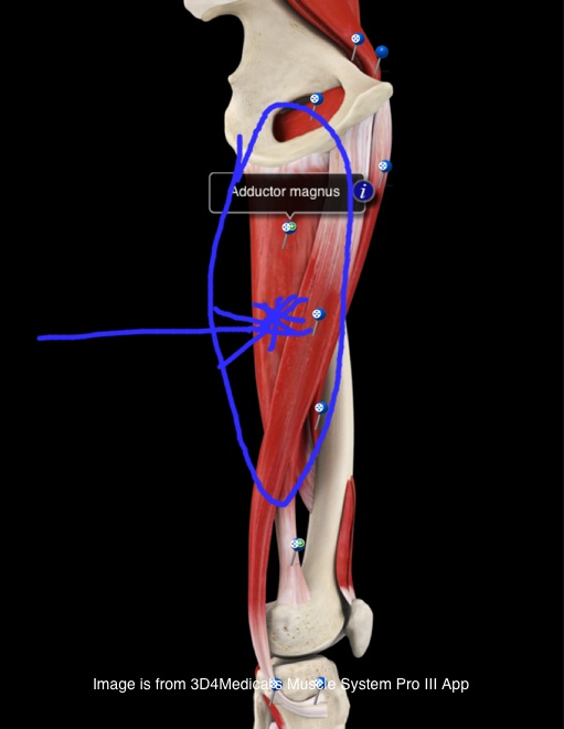 Physical Therapy.  Image courtesy of Muscle System Pro III App
